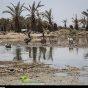 مدعي عام شادكان يبت بموضوع انحدارمياه هور شادكان نحو الخليج الفارسي بعد فيضانات الربيع
