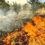 النيران تلتهم ١٠٠ هكتار من غابات دزفول