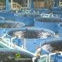 تدشین اکبر مجمع لتربیة سمك الكافيار في دزفول